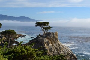 The Lone Cypress in a sea of cypresses - 17 Mile Drive Pebble Beach/Carmel; October 2014